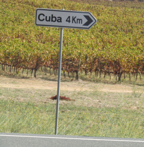 Vineyards in the heart of the Alentejo